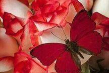 Rosas -mariposas