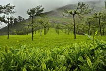 6 Days Kerala Honeymoon package for Rs 14,500. / http://travelgowell.in/kerala-honeymoon/6-days-kerala-honeymoon-packages/munnar-thekkedy-alappy-cochin.html.6 Days Kerala Honeymoon package  for Rs 14,500.covering Munnar,Thekkady,Alappy and Cochin.