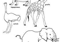 Afryka - zwierzęta