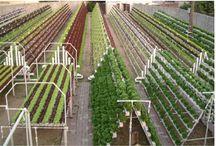topraksız ve dikey tarım