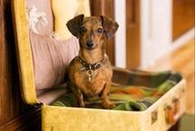 Dogs  / by Deborah Moore