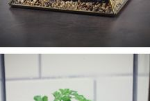 terrarium and miniture plants in odd pots