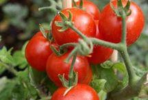 Huerto - Gardening / Http://huerto-macetas.blogspot.com