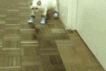ponçik kediler