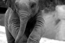 Elephants / by Shelly Heckman-Janiga