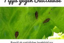 Garten und Schädlinge und Tipps