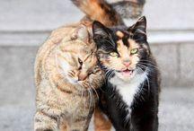 Nothing is better then a Cat  / by Felesha Daniels-Shamber