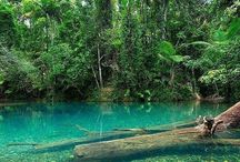 Daintree Rainforest - The Wet Tropics / Beautiful images of some of the places you can see when visiting the Wet Tropics