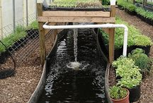 Homestead : Aquaponics & Fish Farming / by Michelle Vaughn