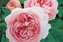 Wish list - flowers