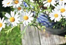 spring lust / by sara