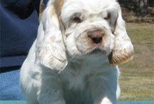 ♡ Honden