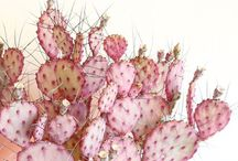 Beautifully Botanical / Flowers, trees, succulents and cacti.