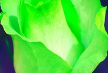 Neon Green!