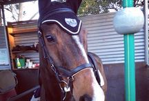 Customers Photos / A small peak at customers in gear supplied by Equus Emporium