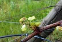 Spring growth in Mendocino county 2014. / Spring time growth.