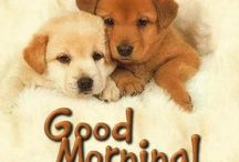 Morning !