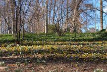Spring Garden Pictures / Spring has sprung in the garden! www.winterthur.org