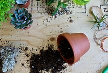 Plantzy plants