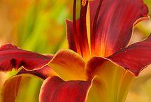 Gardening/plants / by Chanda Schooley