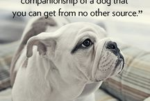 for the love of dogs <3