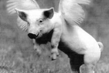 Flying Pigs / Pigs can fly!