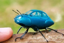 Evolution of the Beetle / by Nolan Sholar