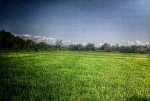 Nature / Tentang alam indonesia