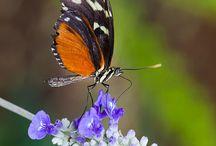 Naturaleza / Todo lo espectacular y bonito de fauna y flora