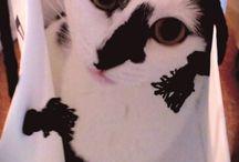 Mercredi le chat!