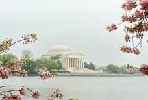 Washington DC / by Yumi Tanaka