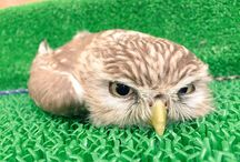 鳥(・θ・) birds