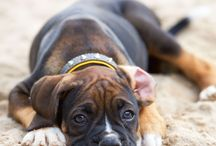 Butch- the boxer