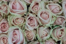Pink Roses / A selection of the Pink Roses available at New Covent Garden Market