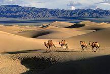 Paisajes Árabe con camellos