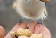 Birds of a Feather / public