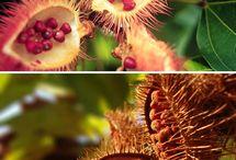 frutos e sementes e flores