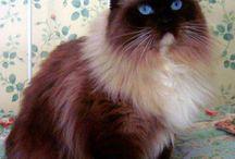 Favorite Kitties / by Bunnies Picnic