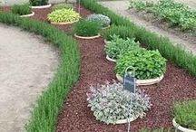 Gardening ideas for back yard