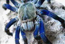 Pókók jajj de édesek