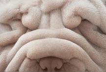 Dogs / by Libby Ballard