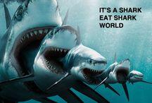 Sharks / by Donna Deerfield