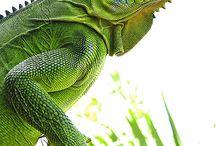 reptiles, insectes, batraciens et gastéropodes