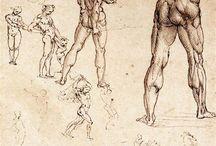 Masters Anatomical Studies