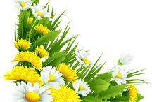 Цветы, цветочный фон