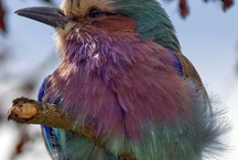 Birds / by Imogene Teague
