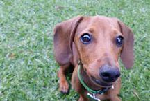 My dog Murphy