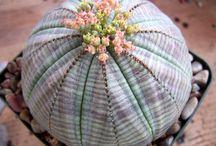 Cactus&Succulentas