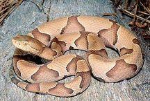anfibios serpientes