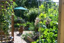 2013 Garden Ideas / by Ali Mickelson